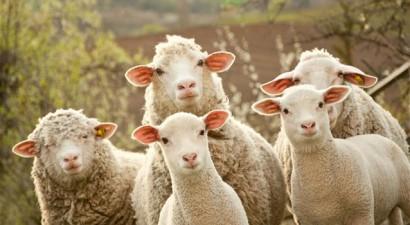 Συναγερμός στους κτηνοτρόφους της Αιτωλοακαρνανίας