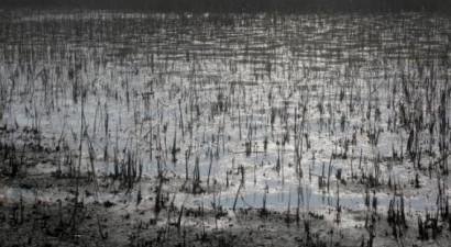 Λίμνη Κορώνεια, ένα βήμα (;) πριν καταντήσει …Αράλη