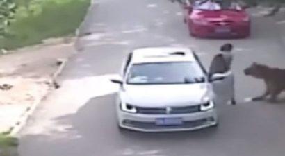Τίγρης έφαγε ζωντανή γυναίκα σε πάρκο στο Πεκίνο (βίντεο)