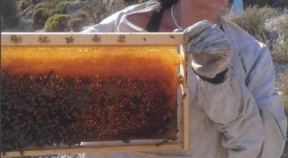 Μελισσοκόμος έγινε γνωστή πρωταγωνίστρια του σήριαλ «Βασιλιάδες» (εικόνες)