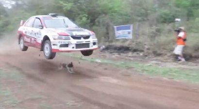 Ανεπανάληπτη τύχη για σκύλο σε βολιβιανό ράλι (Video)