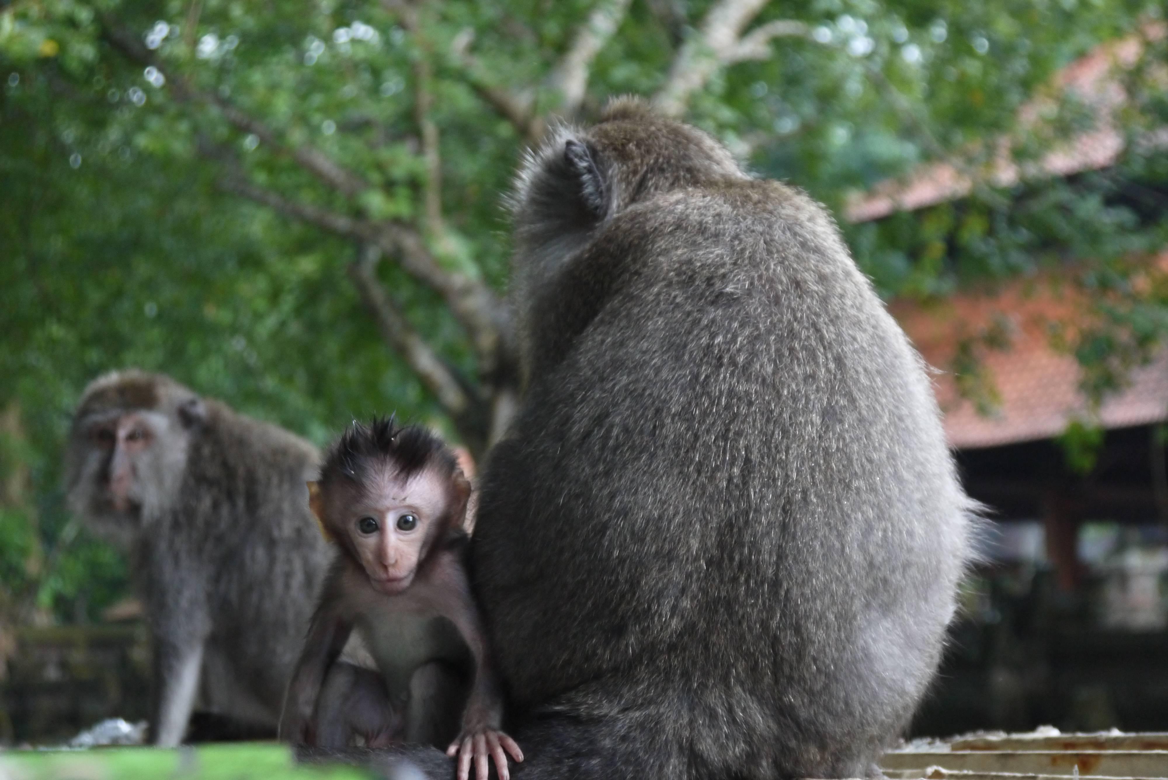 μαϊμού σεξ βίντεο εφηβική γυμνό φωτογραφία